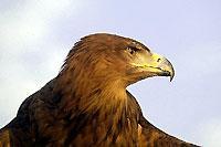 Escapade avec des aigles alsaciens