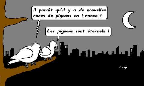 Les  pigeons  sont  éternels . .
