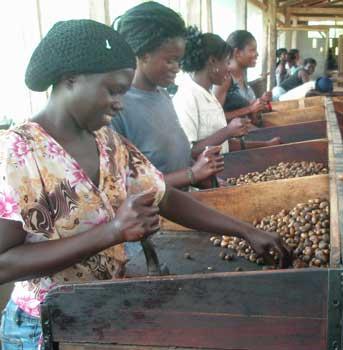 Afrique : le paradoxe de la croissance et du chômage