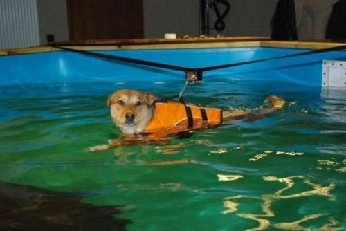 L'hydrothérapie canine en Lorraine