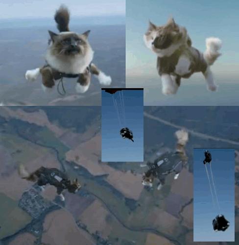 Suède : lâcher de chats en parachutes !