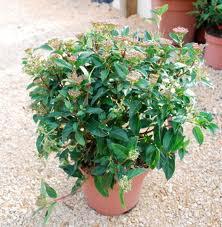 Les plantes aux poteaux