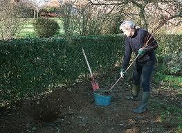 Que faire dans le jardin en novembre