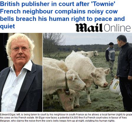Cévennes : des vaches enfreignent les droits de l'homme