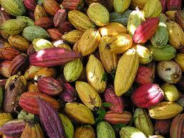 Cacao, un remède pour le cerveau