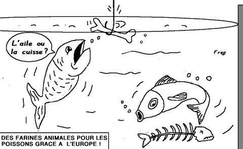 Des  farines animales  pour  les  poissons  !