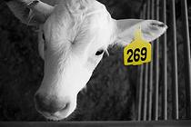 Végétarisme : la France rejoint le mouvement mondial 269 Life