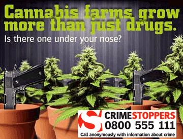 Cannabis : trouvez un producteur près de chez vous grâce… à la police