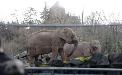 Les deux éléphantes du parc de la tête d'or : des nouvelles !
