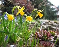 En mars, réalise les premiers travaux de jardinage