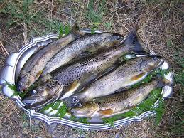 L'ouverture de la pêche à la truite : une semaine après….