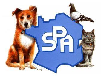La SPA, un toit pour animaux orphelins