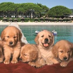 Une vie de chien en vacances.