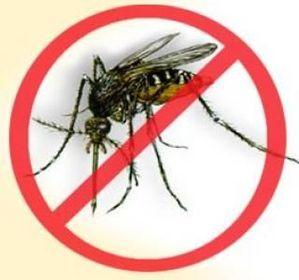 De réelles avancées dans le vaccin contre la dengue.