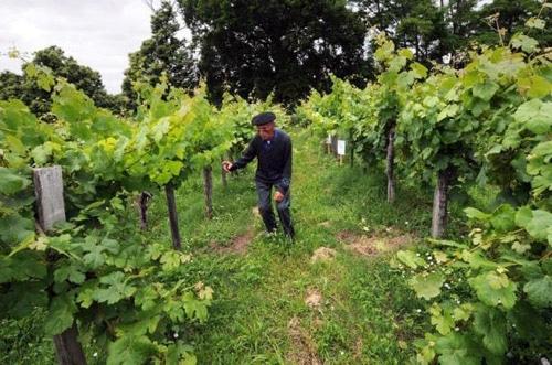 Classer une vigne « monument historique », quel intérêt ?