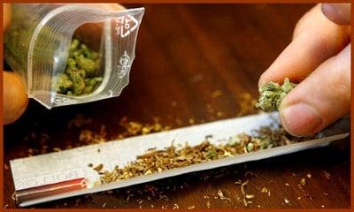 Le cannabis… Drogue douce ou drogue dure ?