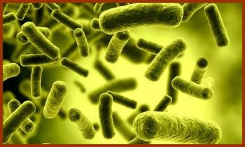 Une nouvelle toxine meurtrière, découverte dans le secret d'un laboratoire…