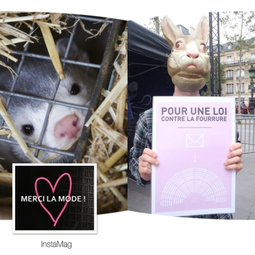 fourrure : des bonnes nouvelles….pour les animaux !