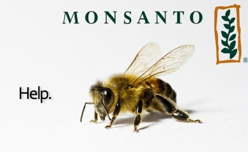 La destruction des abeilles selon Monsanto