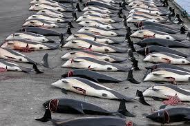 Arrêtons la chasse aux dauphins!