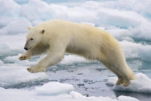 Réchauffement climatique : des conséquences déjà inévitables !