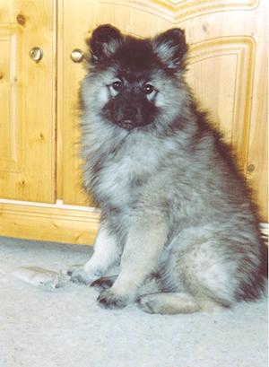 L'exposition canine vue par un chiot