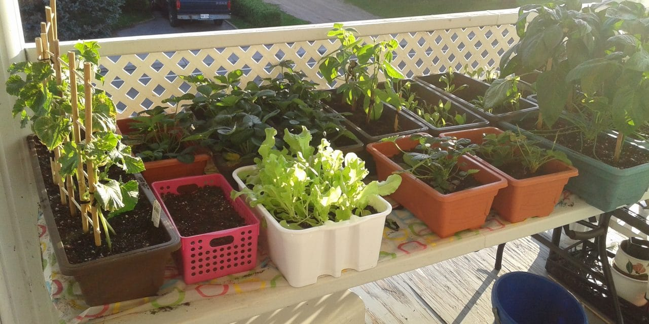3 astuces pour un jardin de balcon à petit prix
