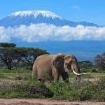 Le safari Tanzanie : voyage touristique de découverte