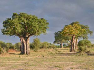 votre safari tanzanie
