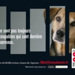 La protection des animaux poursuit sa route!