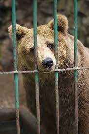 C'est les vacances…Allez zou, au Zoo !