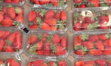 Quels sont les différents types d'emballages alimentaires ?